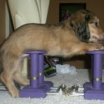 Showstackers Show Stacker Happy Legs Dog Stacking Blocks
